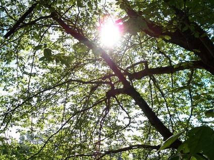 sun-thru-trees.jpg